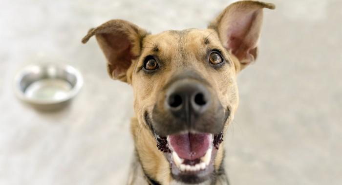 Os possíveis impactos de não ter os cuidados com os dentes dos cachorros